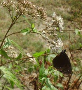 18butterfly