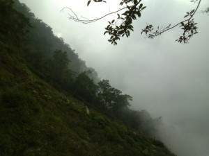 A slope with forest and a landslide, shrouded in mist
