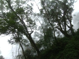 A forest full of mist