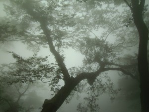 A tree seen through the mist