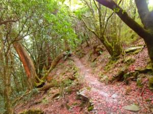 A trail running through a forest