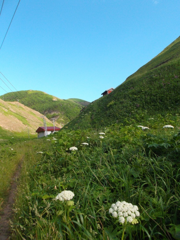 There is a clear blue sky above.  On the right is a green slope in the shade.  In the center left, we see a few hills in the sun in the distance.  Right at the bottom of the nearest hills is a small house.  Coming towards the viewer in the bottom half of the photo is a slope coming down towards us - mostly green with some white flowers.