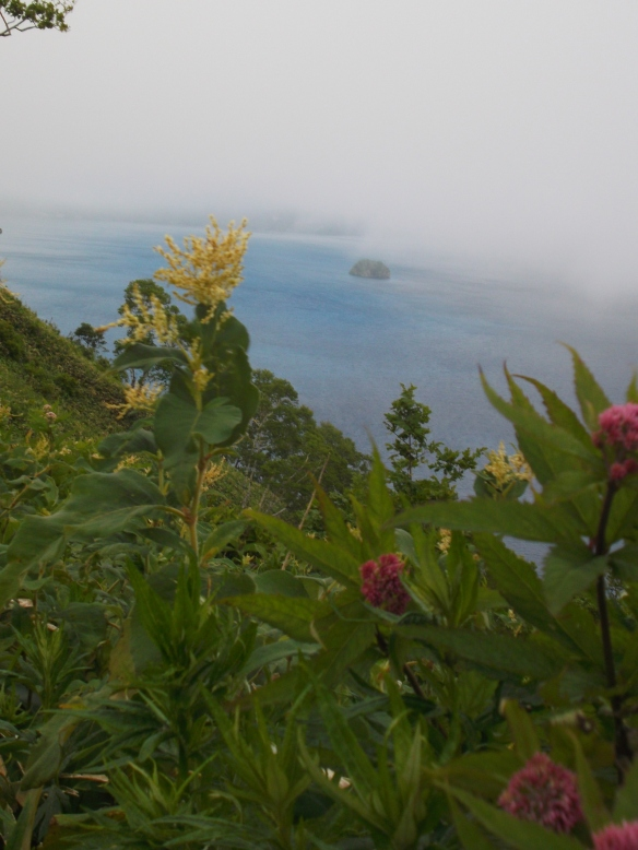 At the top of the photo we see lots of white fog, and just under it is a wide blue lake, with a little island visible in the distance.  In the foreground to the left is a yellow clump of little flowers sticking up, with the green plant underneath, and on the far bottom right corner we see a pink flower.