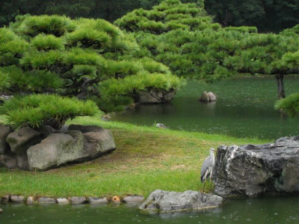 Above there is a series of bonsai pine trees on a little grassy island with decorative whitish rocks in the middle of a green pond.  On the bottom right side of the photo is a grey-white egret standing on a rock at the pond's edge.