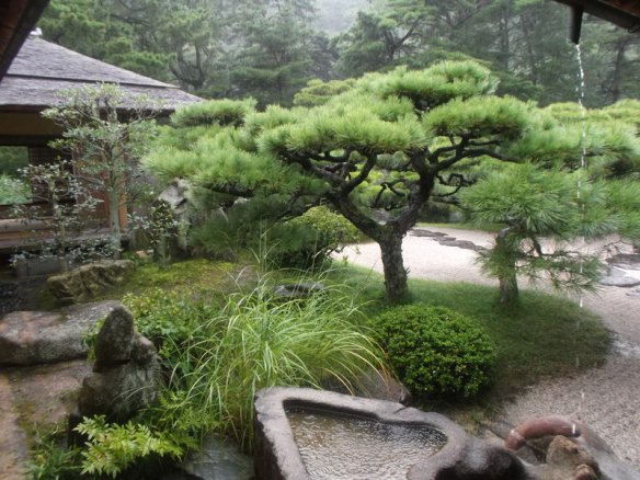 Looking out of the teahouse, there is a bonsai pine tree, with a little stone basin full of water below it, and various green plants surrounding it
