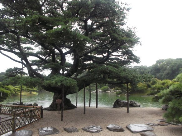 There is a large pine tree supported by wooden beans filling most of the picture, and behind it is the pond, which looks small by comparison.