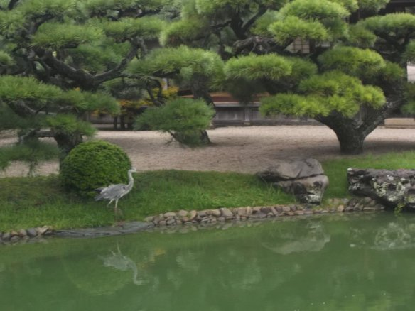 At the bottom of the picture is the pond.  On the left is a grey egret.  Above there is a bunch of bonsai pine trees, with the teahouse barely visible behind the bonsai.