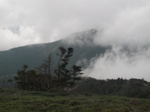 Above, there are white clouds swooping down.  In the background is a green mountain which is about to be obscured by white clouds moving in from the right.  In the foreground is a set of pine trees on the bottom left, bravely standing in the face of the cloudy onslaught