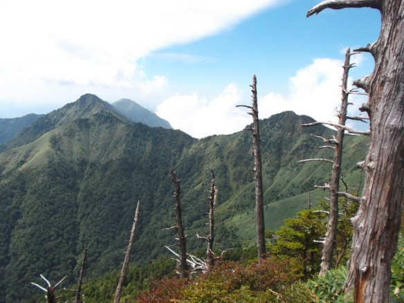 Bare tree trunks stick up from the slope, with majestic mountain peaks behind
