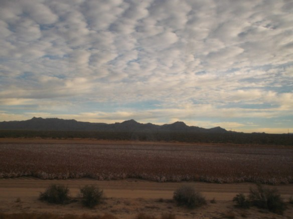 It's a cotton field in Arizona