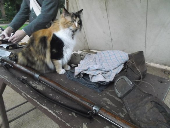 A cat next to a musket.