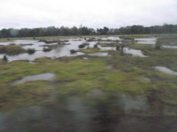 Louisiana Bayou!