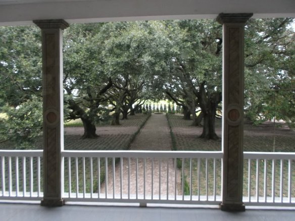 The entrance of Whitney plantation, lined with live oak trees.
