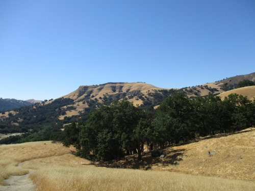 Under a blue sky, rolling hills are covered by yello dry grass with some patches of green oak trees.